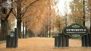 한국의 아름다운 길_담양 편