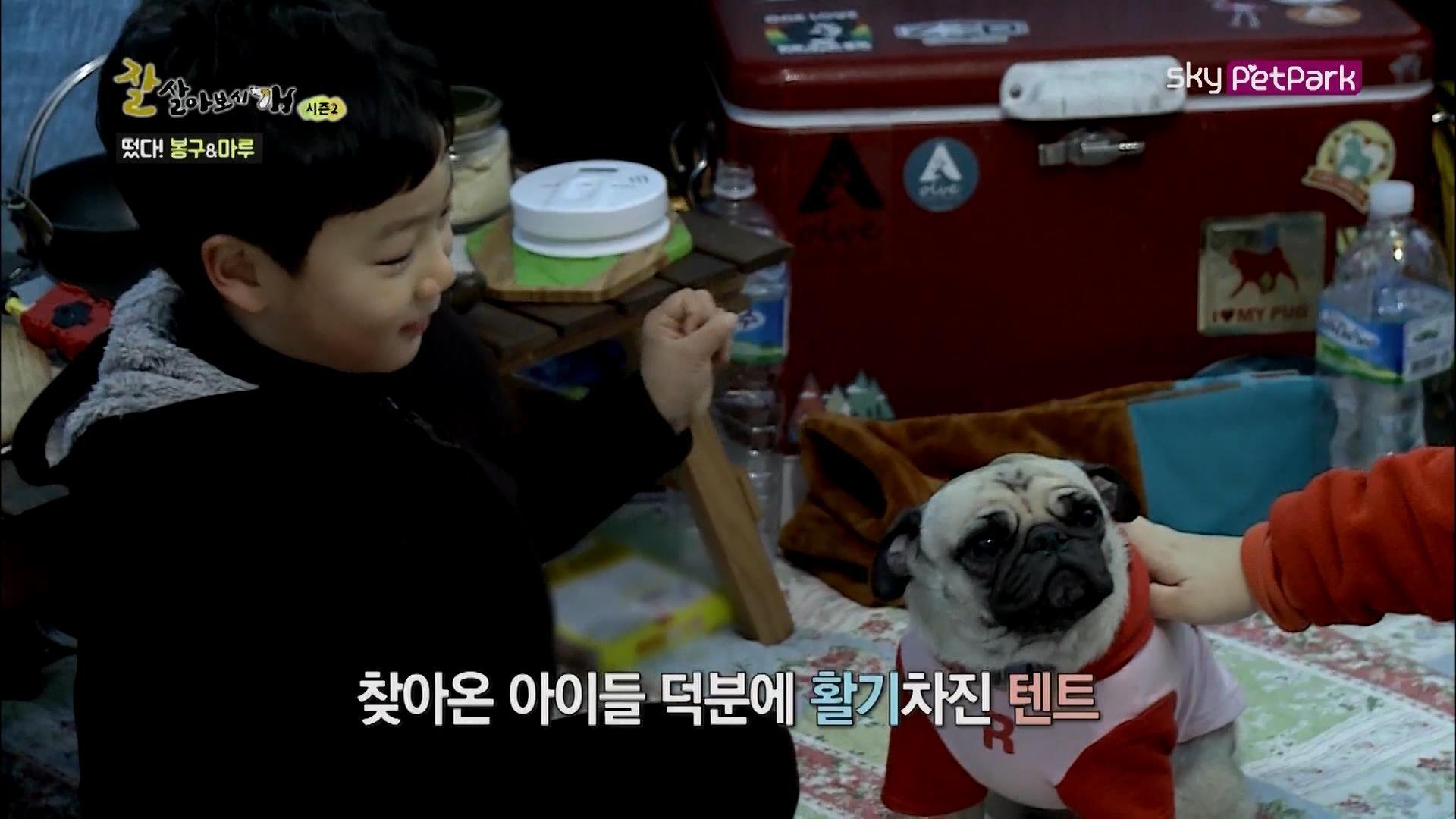 봉구 마루와 함께 캠핑에 나선 수미씨네 가족  6회