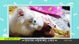 [제보영상]마이펫을 소개합니다 21탄