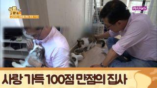 고양이의 마음을 여는 행동 수정 솔루션 [식빵굽는 고양이] 22회