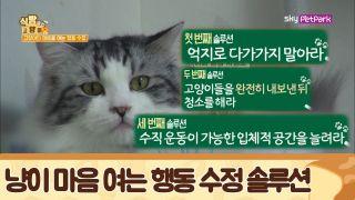 영양제 + 집사의 사랑 = 완벽한 고양이 아침 식사 [식빵굽는 고양이] 22회