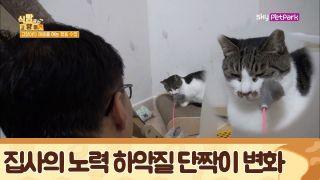 집사의 노력으로 이루어 낸 하악질 '단짝이'의 변화 [식빵굽는 고양이] 22회