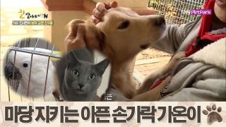 말하는 앵무새 '로사&수리' & 아픈 손가락 '가온이' [잘살아보시개 시즌2] 46회